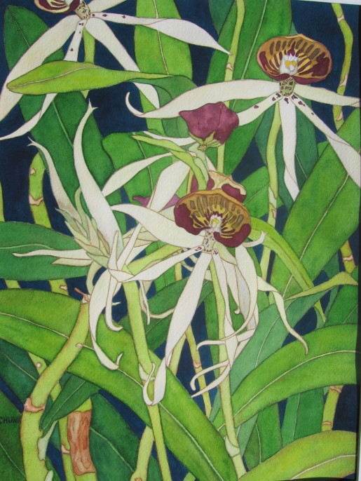 Karen Schunk, Florida Orchid